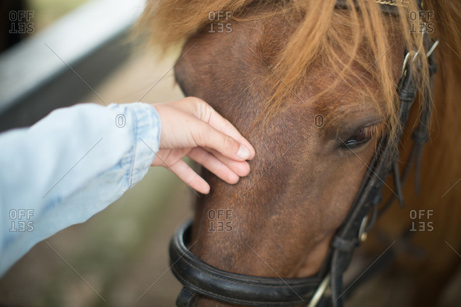 Close up of girl touching horse at stable