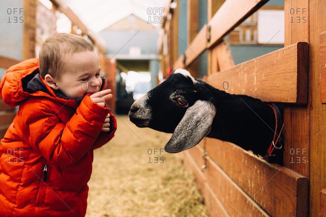 Boy feeding a goat through a wooden fence