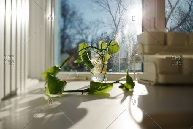 Plant in the morning light