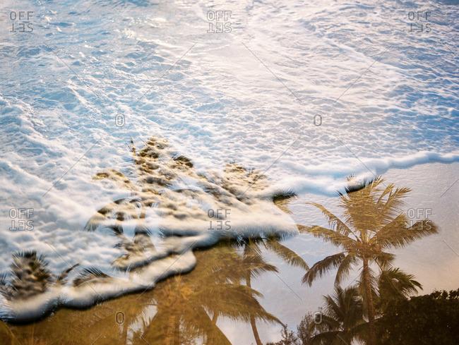 Palm trees on waves on beach
