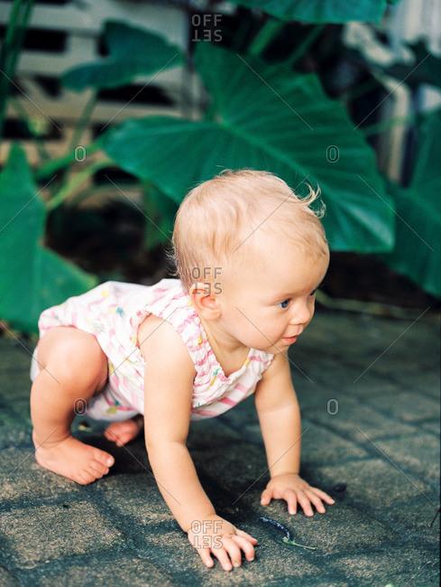 Baby girl crawling outdoors