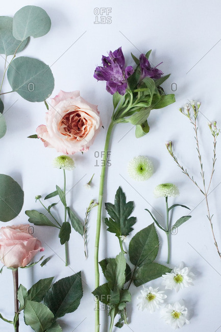 Variety of cut flowers on a white background