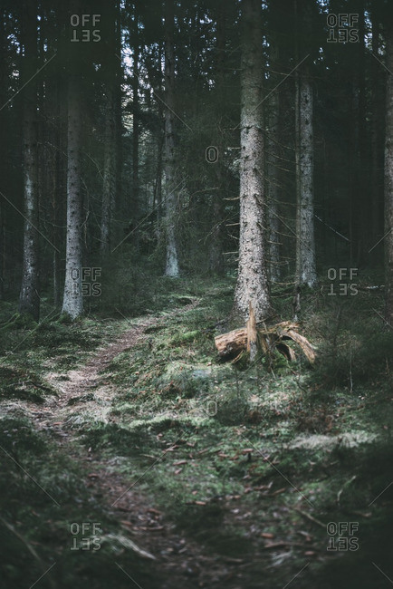 Trail leading through a forest in Sweden