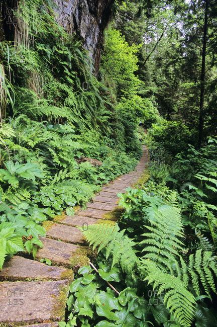 West Coast Trail, boardwalk path in fern forest, Vancouver Island, British Columbia, Canada
