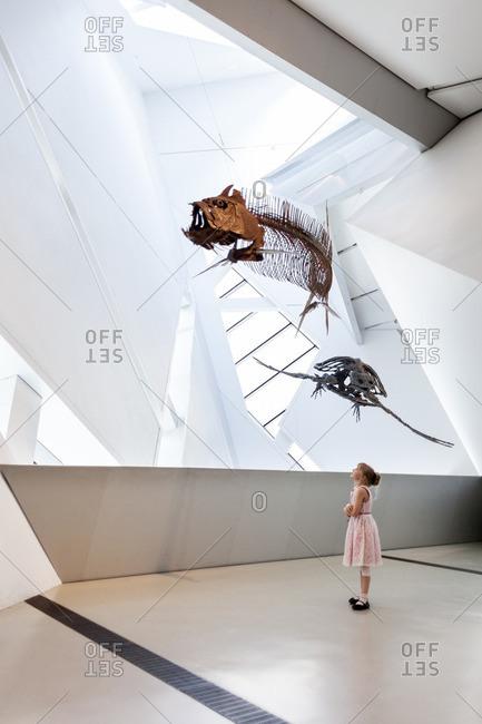 Toronto, Ontario, Canada - July 19, 2013: Girl looking at dinosaur fossils at Royal Ontario Museum