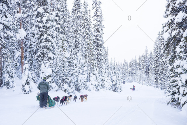 Tourists enjoy dog sled ride, Lake Louise, Banff National Park, Alberta, Canada