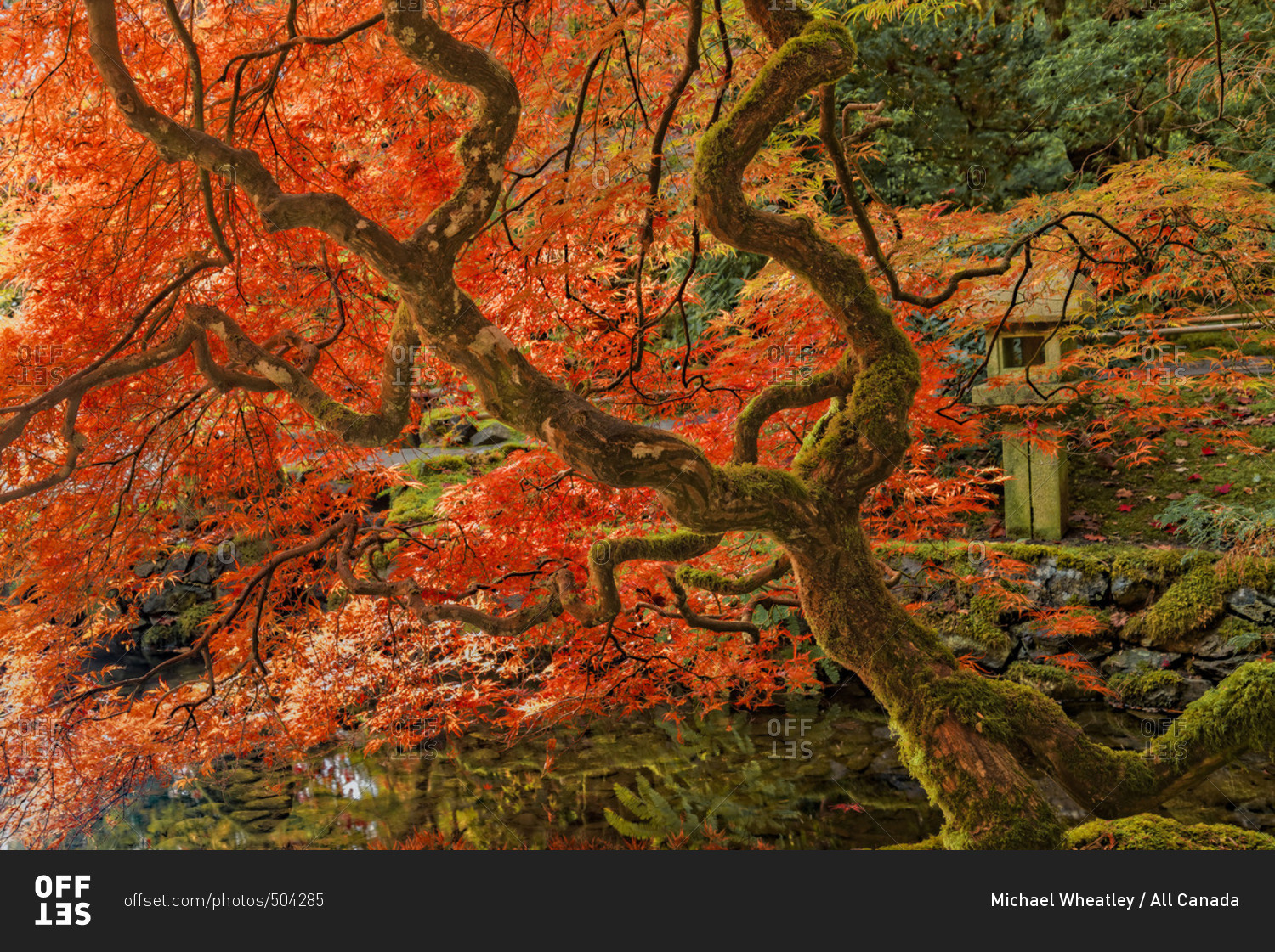 Fall , Japanese Garden, Butchart Gardens, Brentwood Bay, Vancouver ...