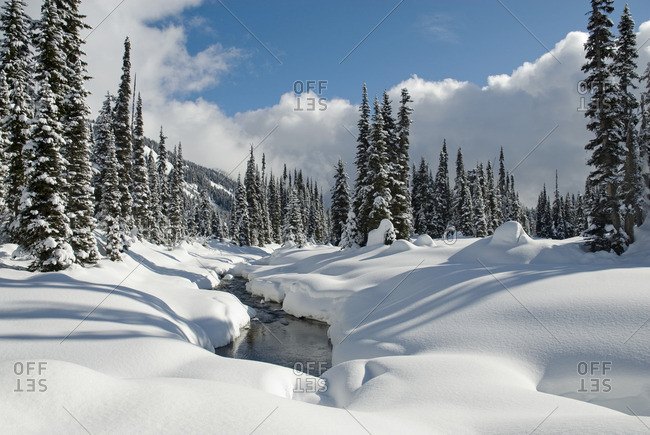 Beautiful fresh snow blankets the Callaghan backcountry ski area, near Whistler, BC Canada
