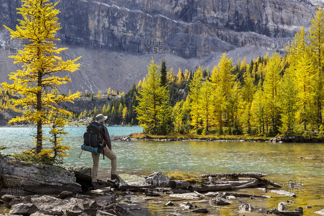 Banff National Park, Alberta Canada - September 16, 2012: A back packer pauses on the shore of Skoki Lake in the Skoki wilderness area