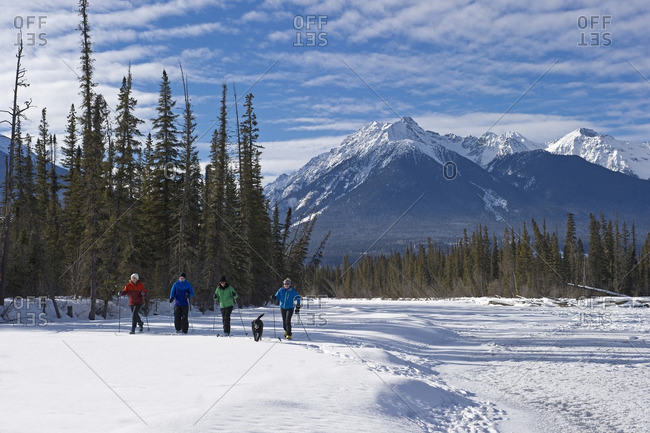 British Columbia, Canada - February 1, 2014: A group of cross country skiers explore 'Jackman Flats' near Valemount, Thompson Okanagan region