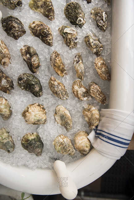 Clawfoot tub filled with oysters on ice