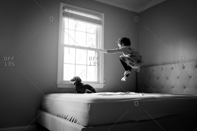 Little girl jumps on the bed while dog calmly looks out the window