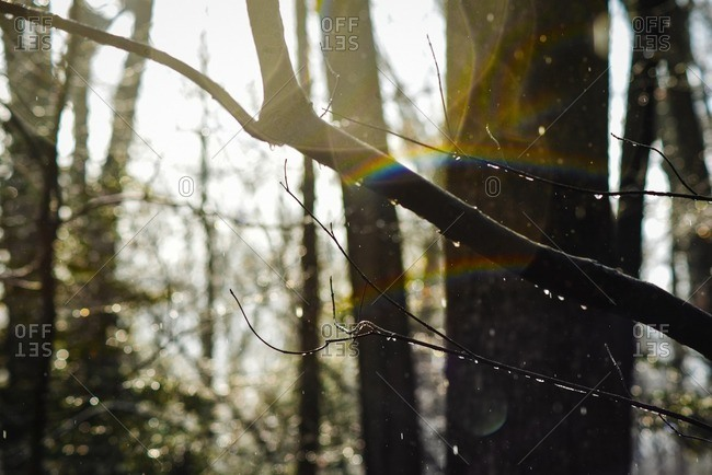 Rainbow lens flare through wet branches