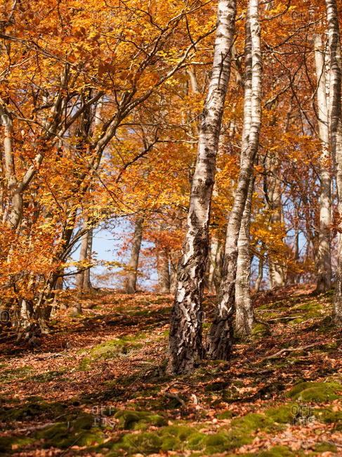 Trees with autumn foliage on a hillside