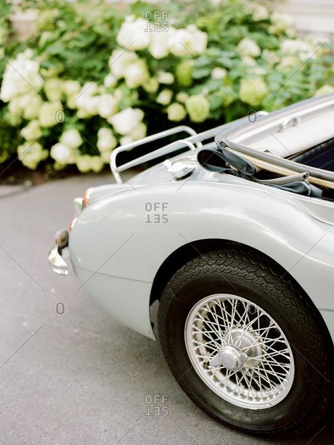 Rear tire of a classic convertible car near a white flowering bush