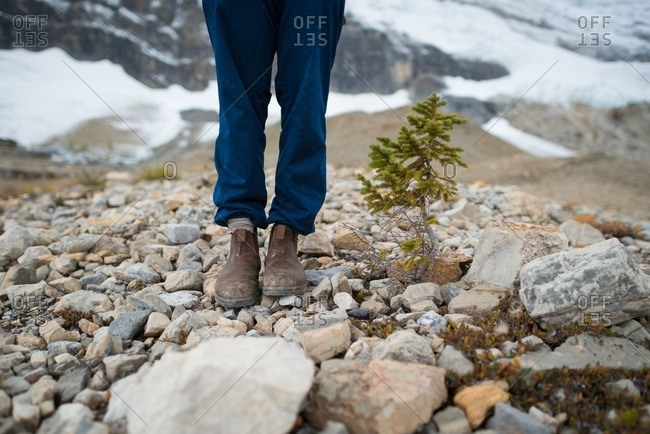 Woman stands beside dwarfed tree growing at high elevation
