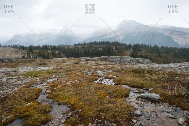 Water snakes through a mountaintop meadow under a cloudy fall sky