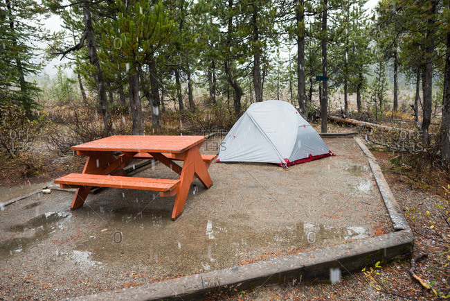 "A ""bear"" (bare) campground free of food debris"