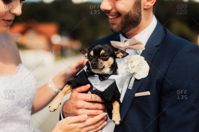 Couple holding a dog dressed in tuxedo outfit