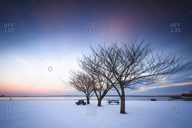 Bare cherry trees in winter at the north Kingstown town beach in Rhode island