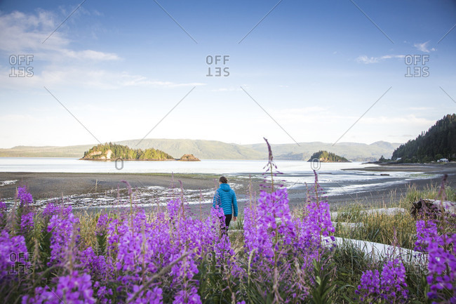 A woman walks onto a low-tide beach with purple flowers in the foreground in haida gwaii, British Columbia