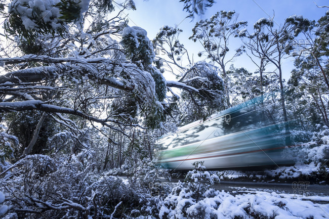 A shuttle bus travelling through the snowy trees in Tasmania's cradle mountain