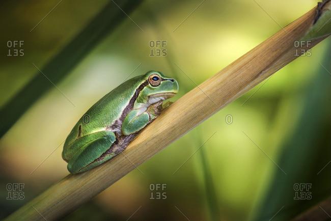 Frog on plant stem