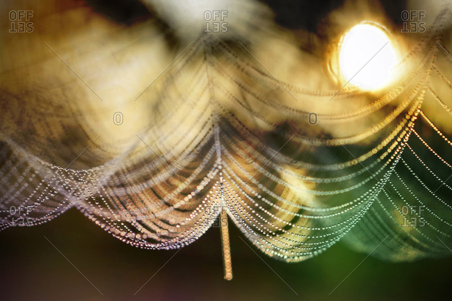 Drops of dew on a spider web