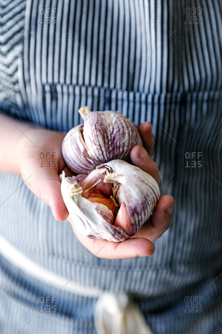Garlic bulbs in hand