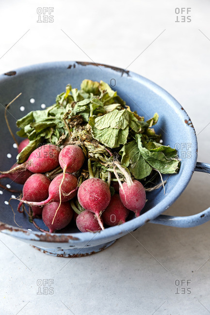 Radishes in colander side angle