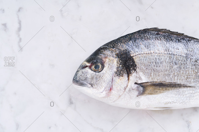 A fish in close up on marble