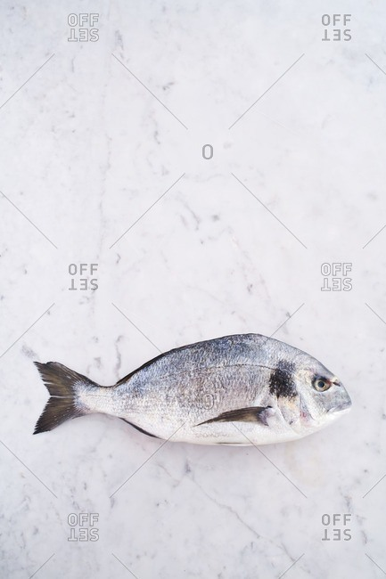Whole fish on marble background