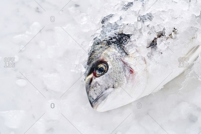 A fish covered in ice