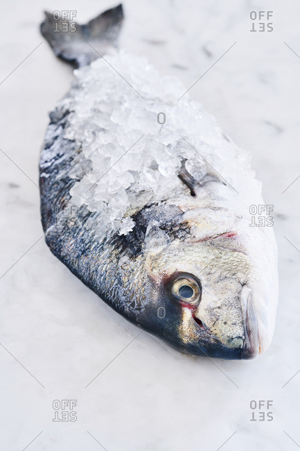 Whole fish covered with ice