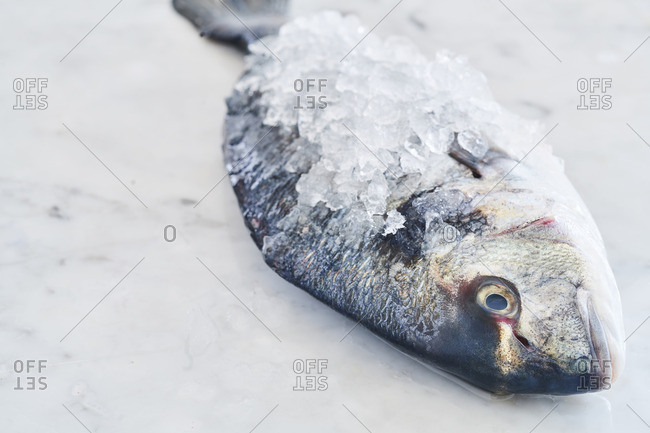 Whole fish covered in ice