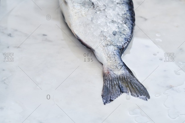 Tail of fish covered in ice