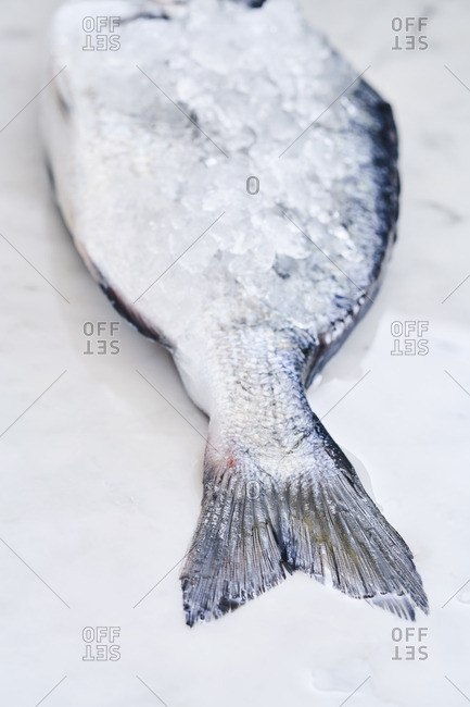 Tail of fish covered with ice