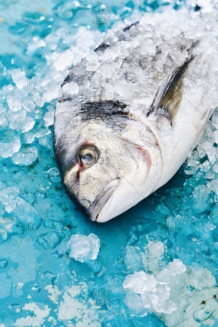 Fish covered in ice on blue background