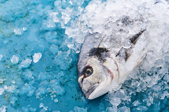 Fish with ice on blue background