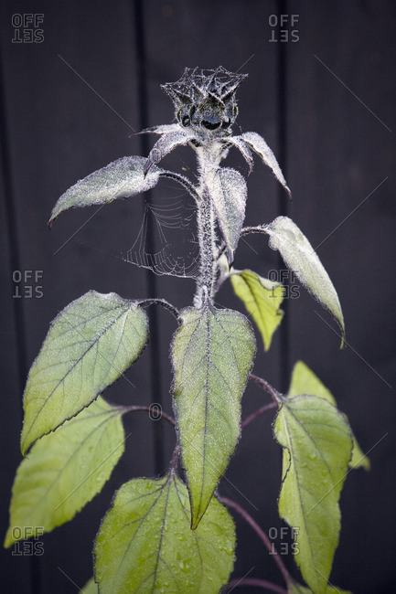 Spider web on flower