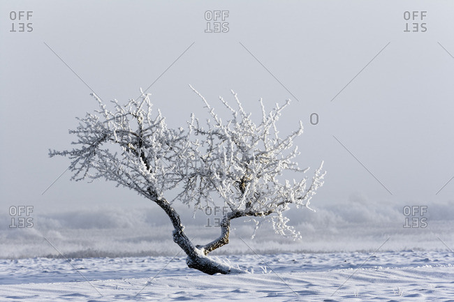 Frosted tree on field
