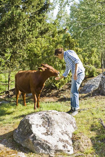 Woman feeding cow on farm