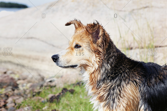 Dog with wet fur