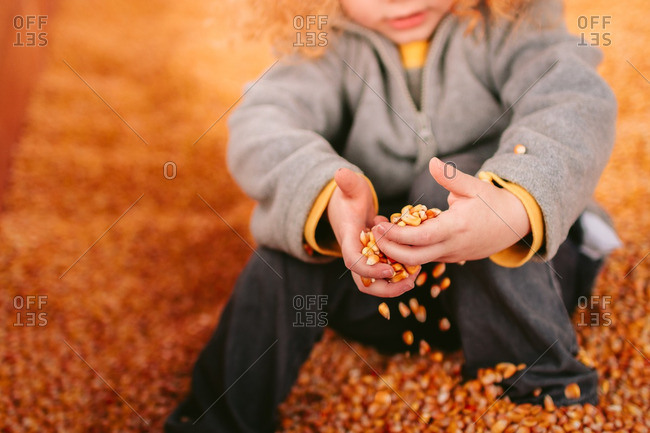 Boy sitting in a corn pit holding kernels of corn