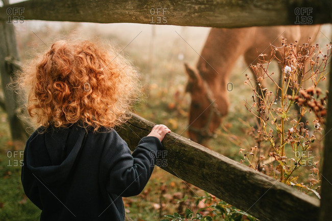 Little boy standing at a wooden fence looking at a horse