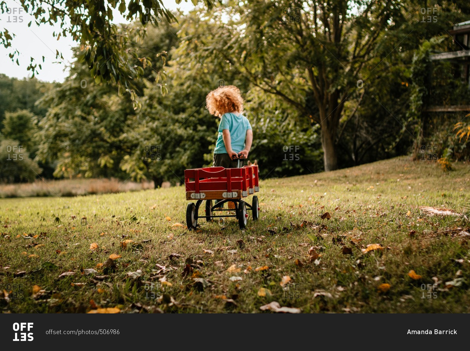 Little Boy Pulling A Red Wagon Behind Him In A Yard Stock Photo Offset