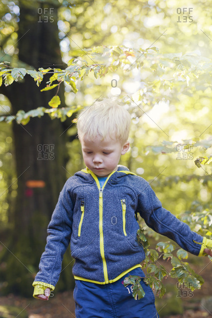 Boy walking in forest