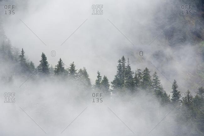 Fog Rises Among The Trees On Fox Island. Kenai Fjords. Summer Kenai Peninsula Alaska.
