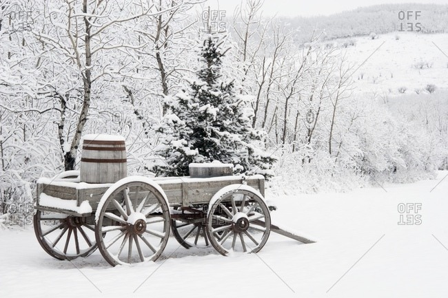 Alberta, Canada; Wooden Wagon And Trees Covered In Snow