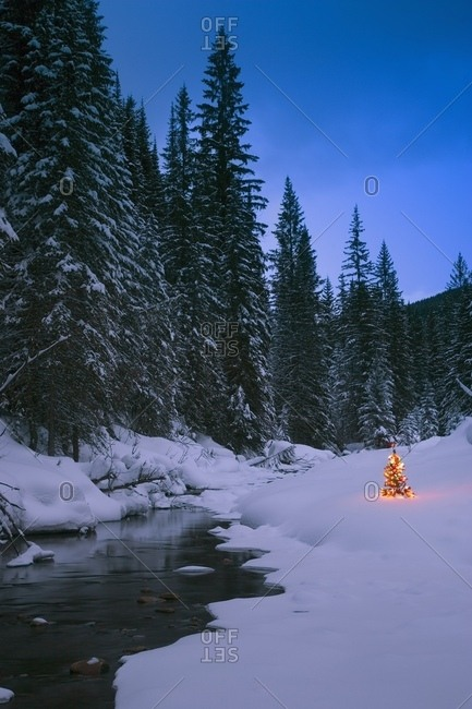 Glowing Christmas Tree By Mountain Stream